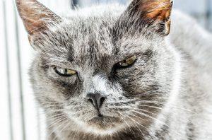 Katze die böse schaut-