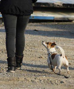 Hund macht Blickkontakt - Körperhaltung