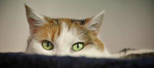 Katze - Selbstbewusstsein stärken