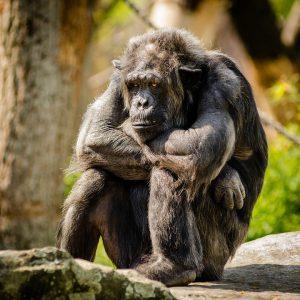 Affe deprimiert - Selbstbewusstsein stärken