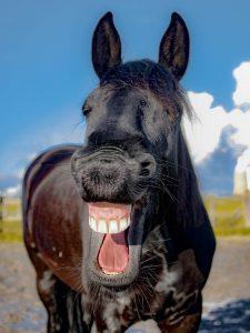 Pferd lacht- Schlagfertigkeit
