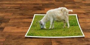 Schaf auf einem visuellen Grasbild überzeugen