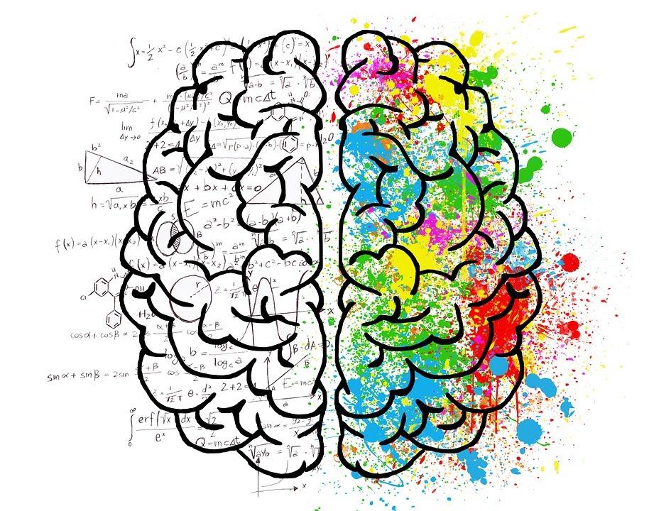 Gehirn als Habitus