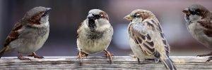 Vögel unterhalten sich - Smalltalk