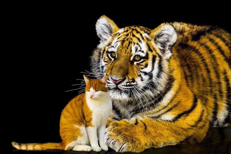 Löwe und Katze Persönlichkeit