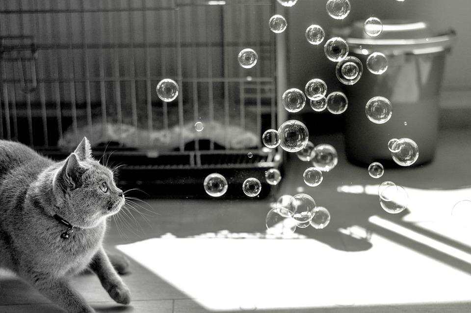 Katze mit Seifenblase Schachtelsätze