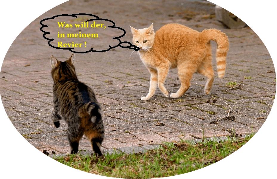 2 Katzen stehen kurz vor einer Konfrontation