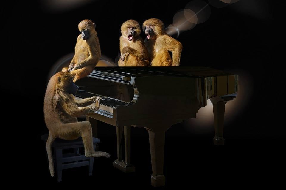 Affen spielen Klavier Aufmerksamkeit