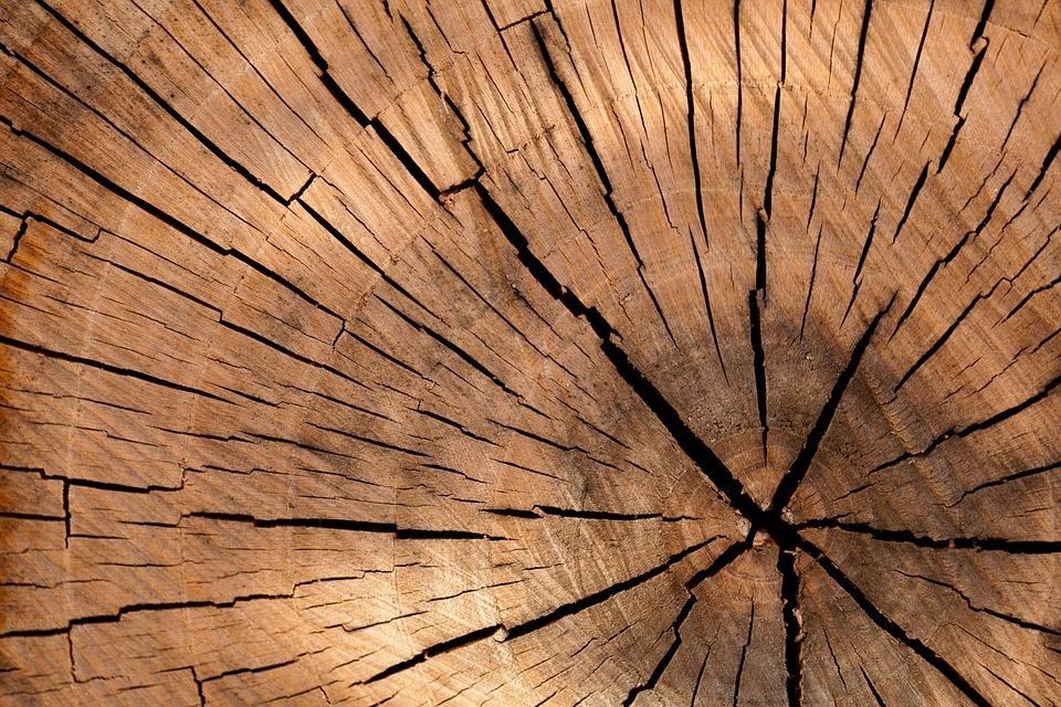 Baum hat eine Struktur Rede halten