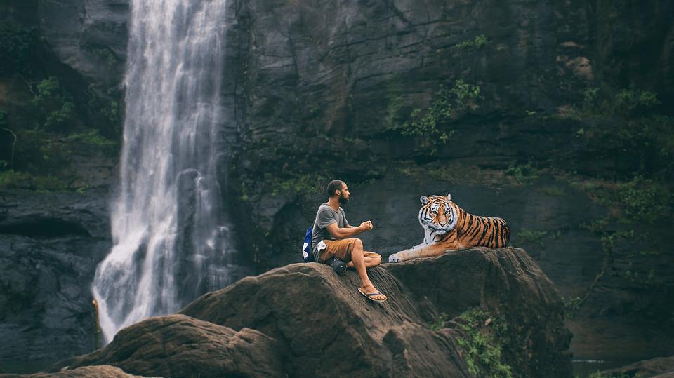 Ein Tiger macht keine Gesprächsführung