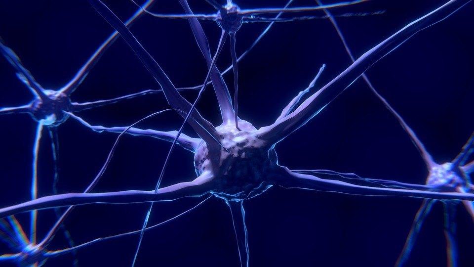 Nervenzellen Überzeugungskraft