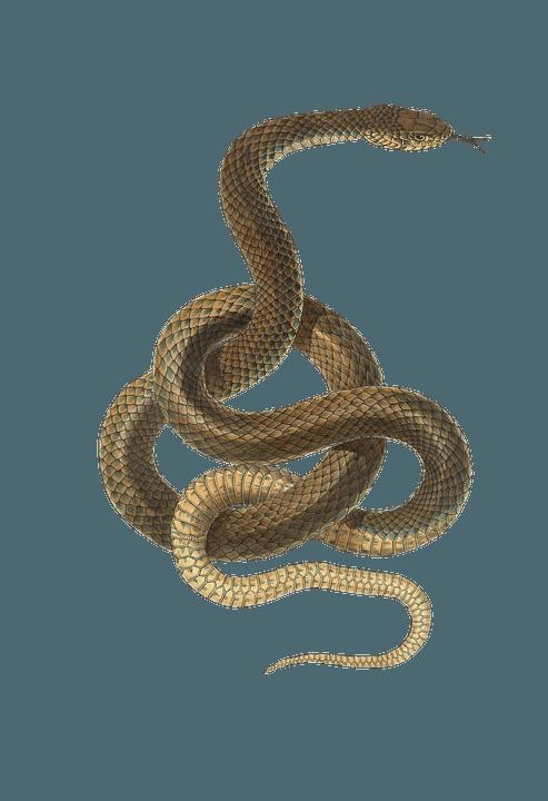 Schlange rhetorischer Würgegriff
