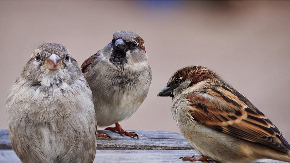 Vögel quatschen Ähm