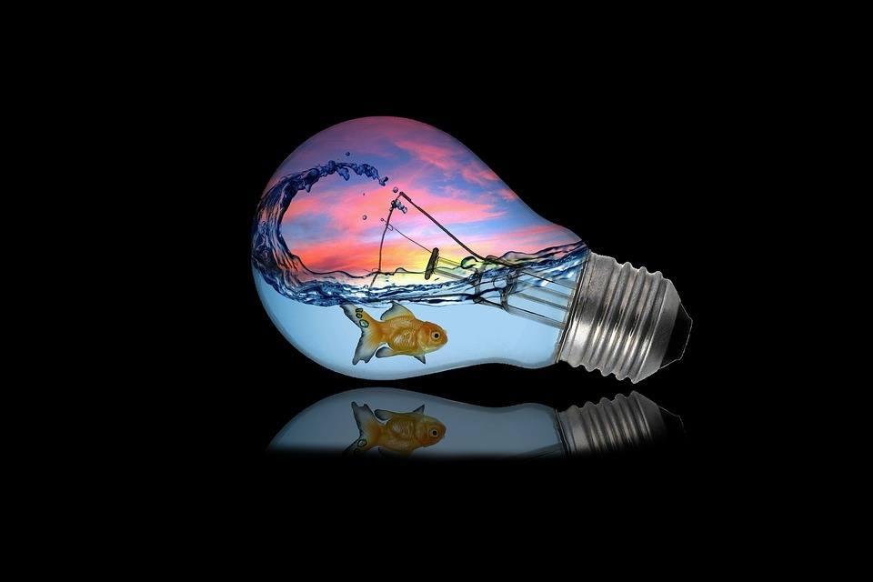 Glühbirne + Fisch = Vertrauensvorschuss