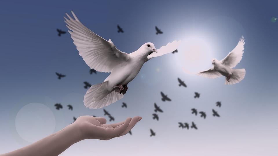 Präsentationstraining Vogel