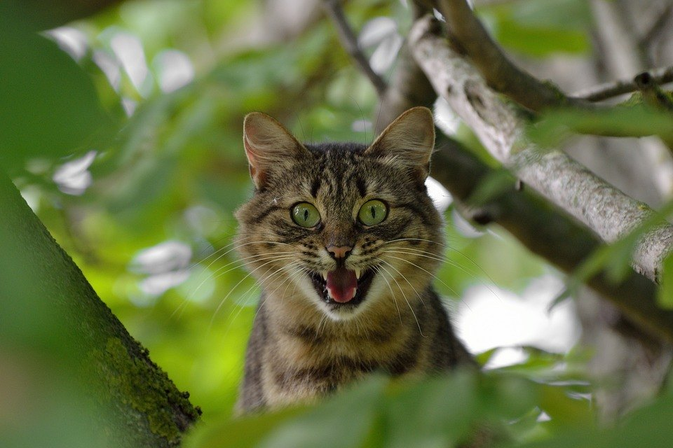 Katze ist erregt freie Rede