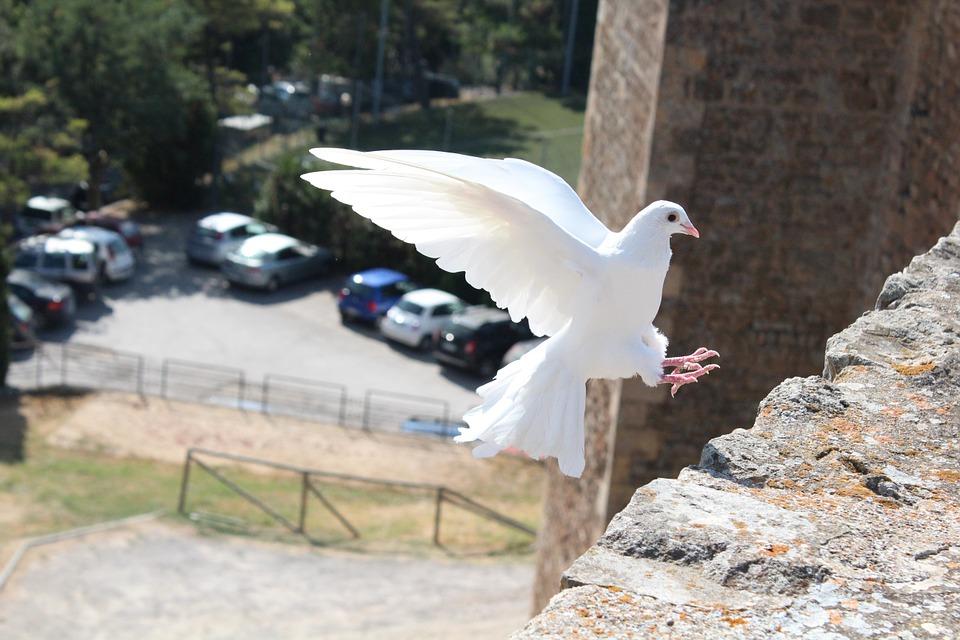 Vogel legt zur Landung an Glaubenssätze