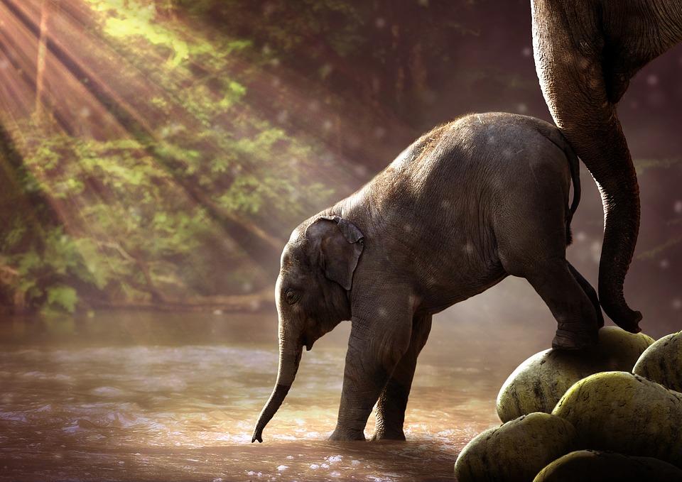 Elephant keine Angst Charakter