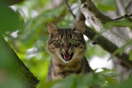 Agressive Katze freie Rede