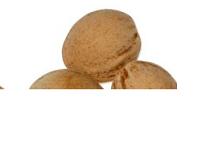 Kirschkern