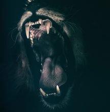 Löwe Selbstbewusstsein